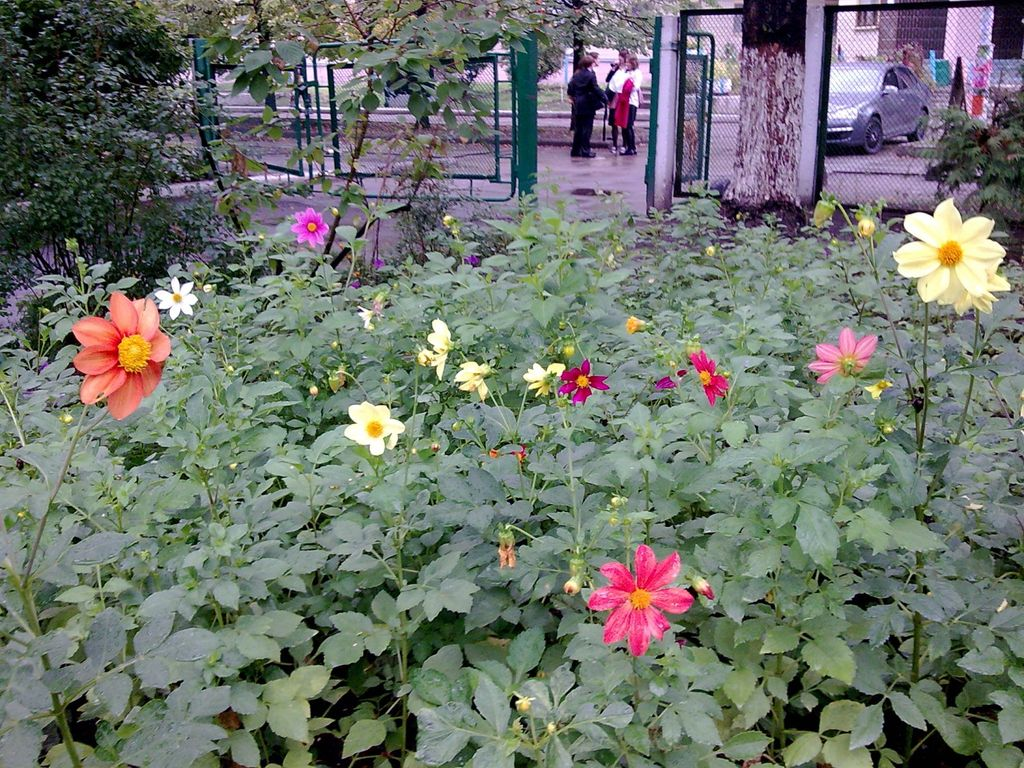 цветы веселые ребята фото на клумбе представляем