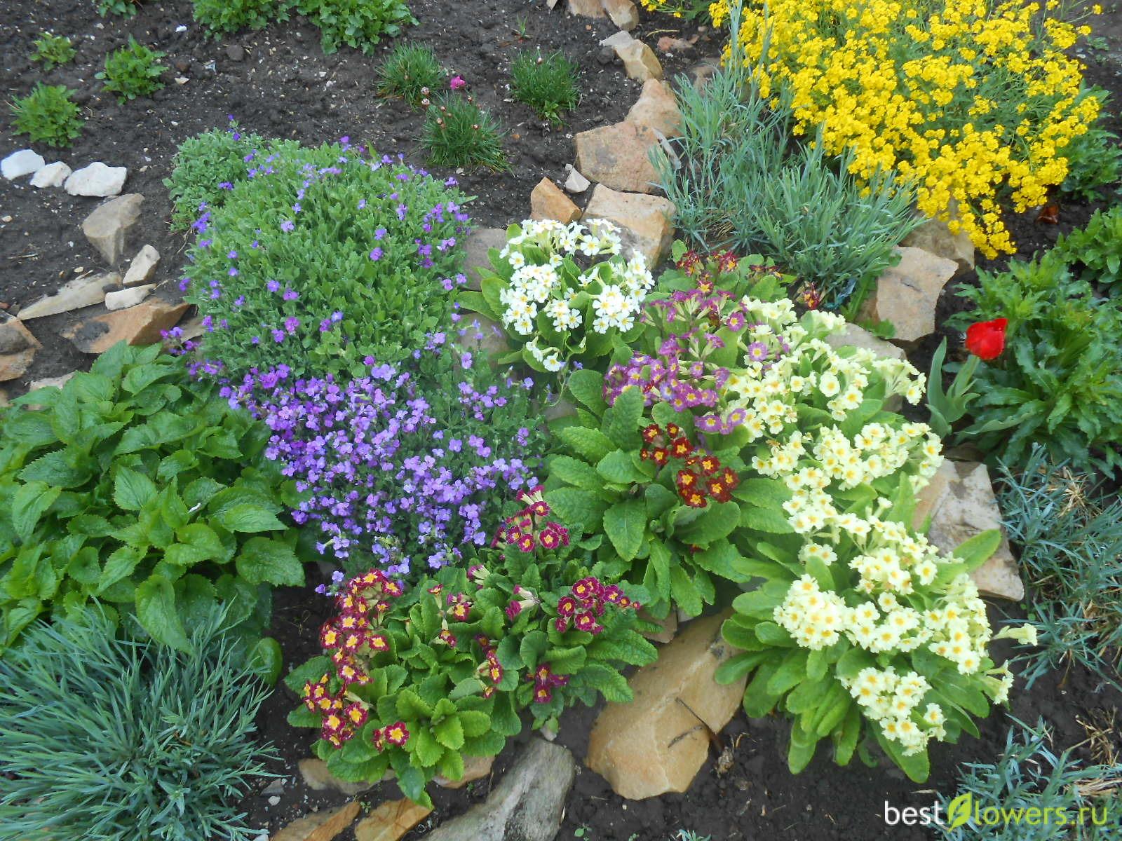Теневыносливые цветы для сада однолетние